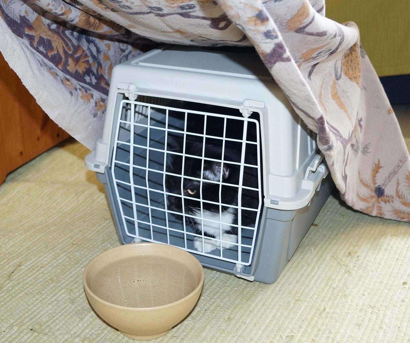 inhalation huiles essentielles chat