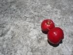 fruits d'acérola