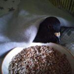 soins pigeon malade
